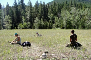 Crewmembers handpulling and bagging up Knapweed at the Confluence of Badger Creek and Lookout Creek